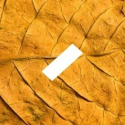 Saveur tabac Fr original